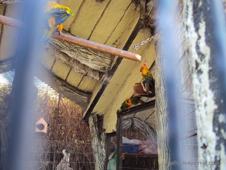отель Sea Gull зоопарк (13)