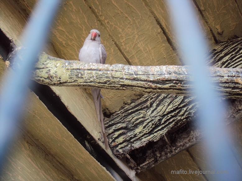 отель Sea Gull зоопарк (15)
