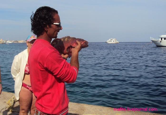 рыбалка Хургада (2)