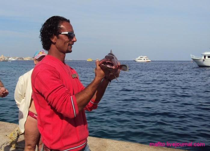 рыбалка Хургада (3)