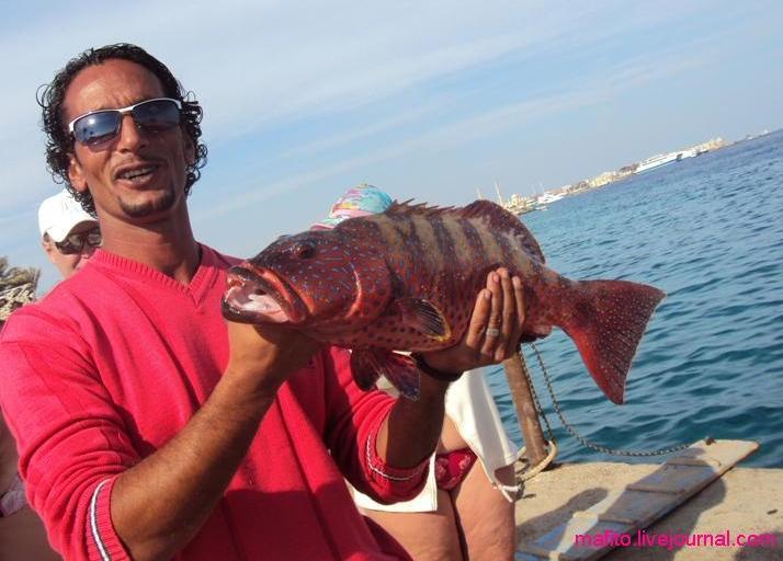 рыбалка Хургада (4)