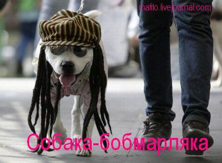 собака-улыбака (1)