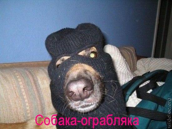 собака-улыбака (6)