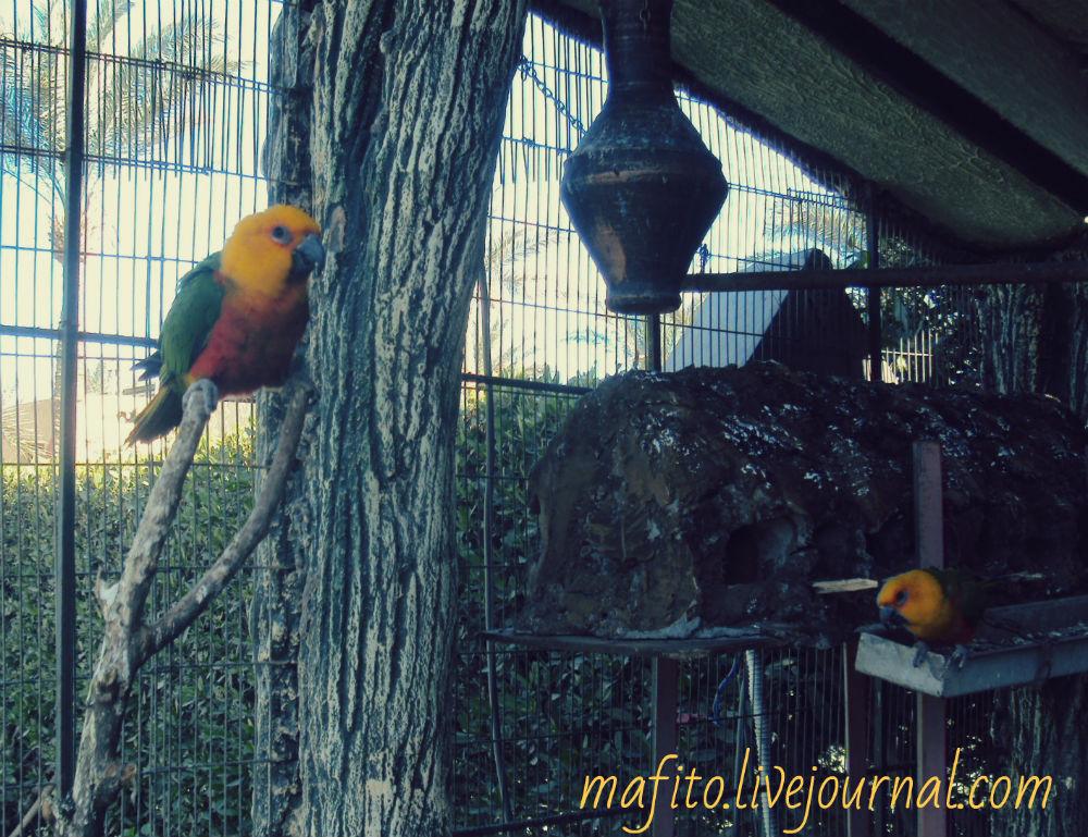 попугай фото