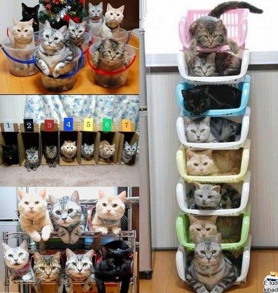 котэ  коты котики
