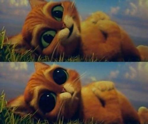 котэ  коты котики (1)