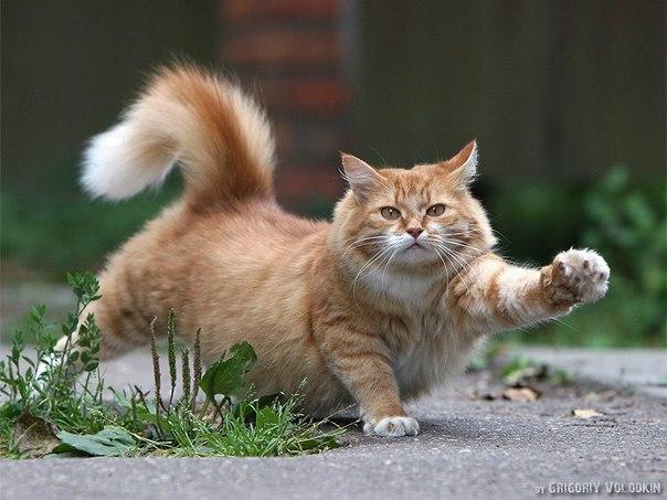 котэ  коты котики (3)