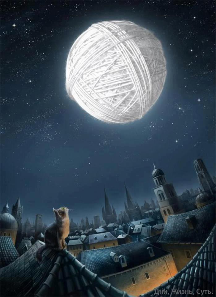 котэ  коты котики (5)