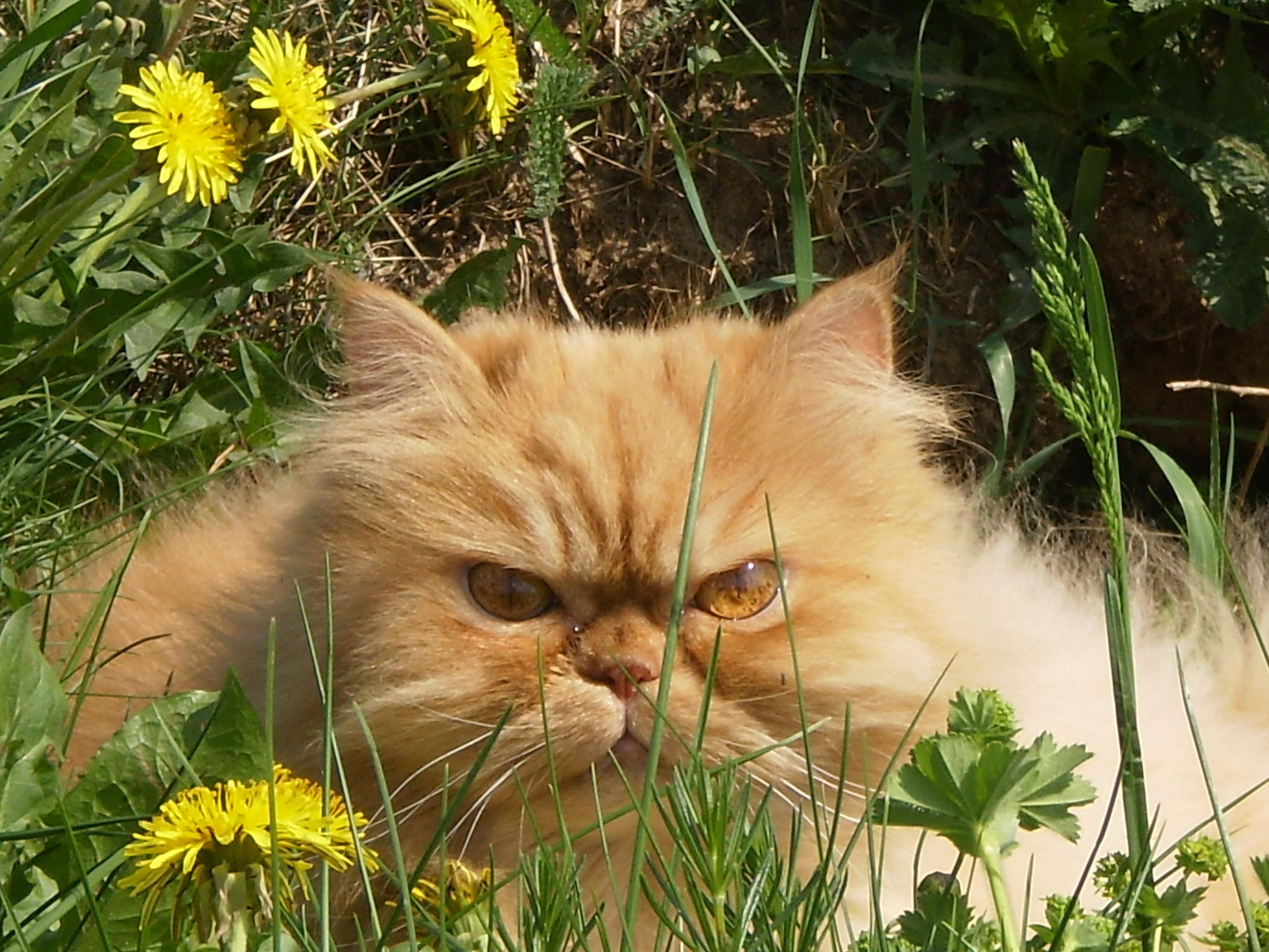 котэ  коты котики (12)
