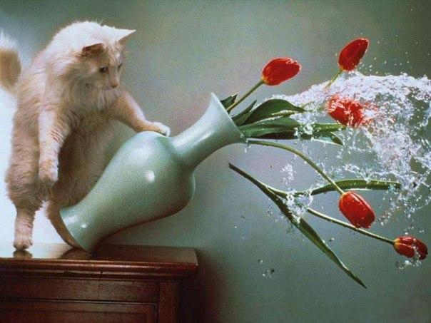 котэ  коты котики (13)