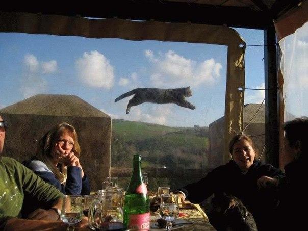 котэ  коты котики (14)