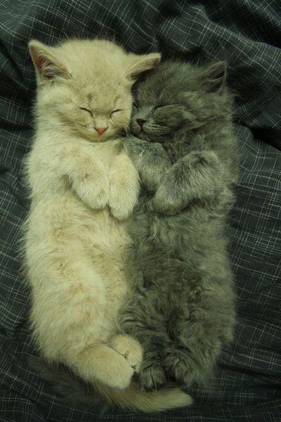 котэ  коты котики (16)