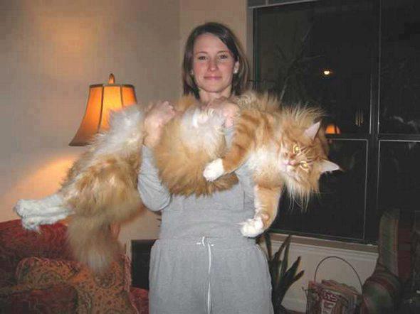 котэ  коты котики (17)