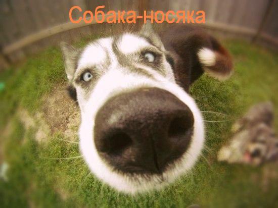 Нос собаки своими руками