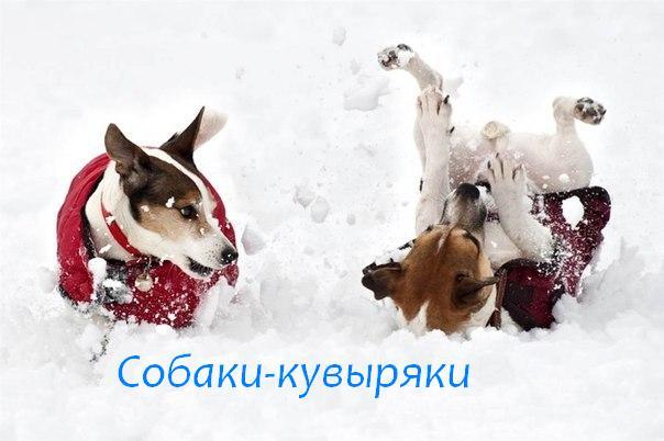 собаки-улыбаки (3)