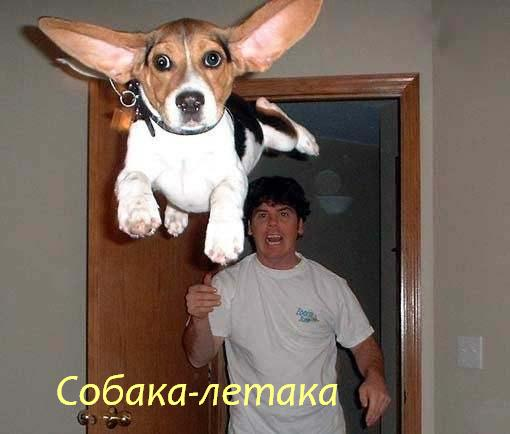 собаки-улыбаки (5)