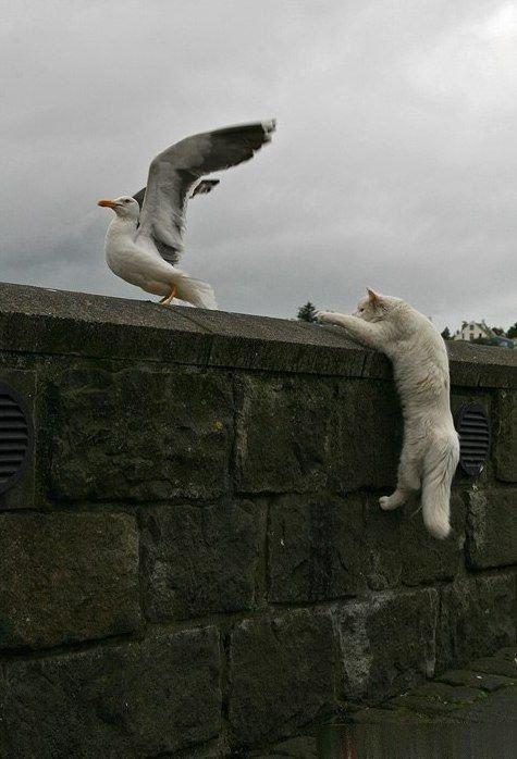 котэ, коты, котики