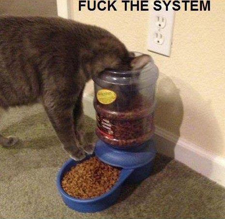 котэ, коты, котики (1)