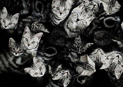 котэ, коты, котики (3)