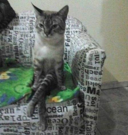котэ, коты, котики (10)