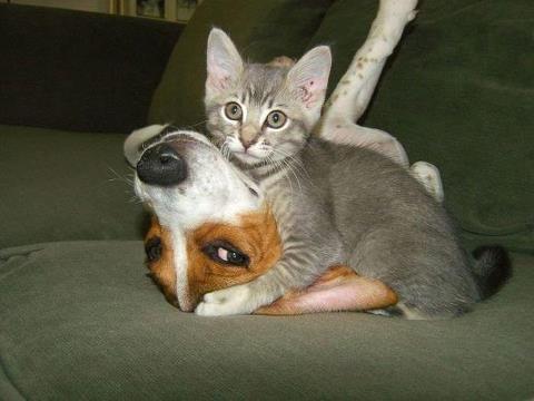 котэ, коты, котики (11)