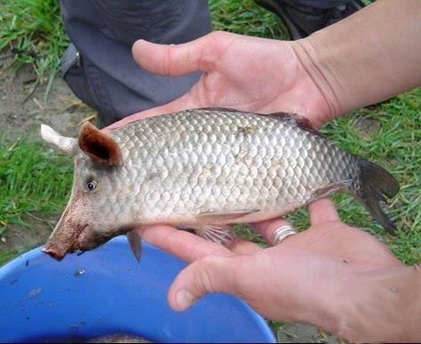 Рыба хрююююзь