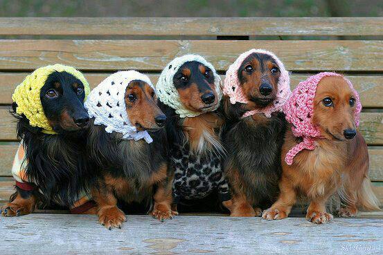 собаки улыбаки (4)