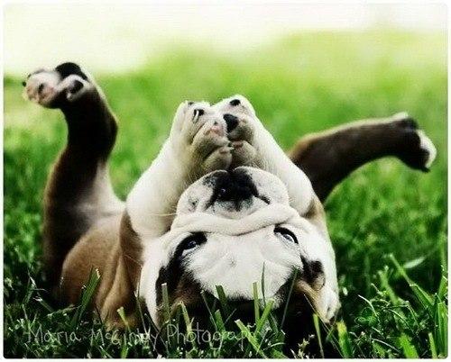 собаки улыбаки (7)