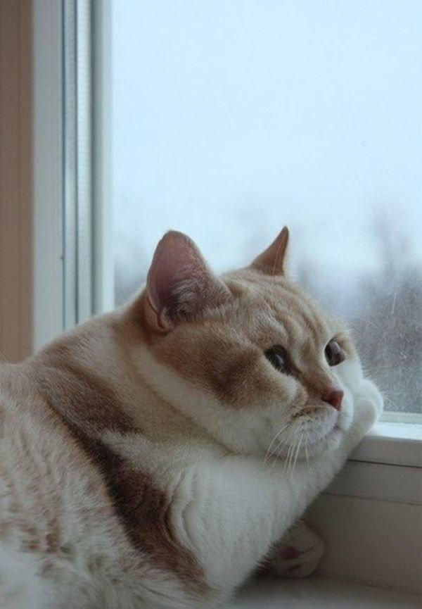 котэ, коты, котики (2)