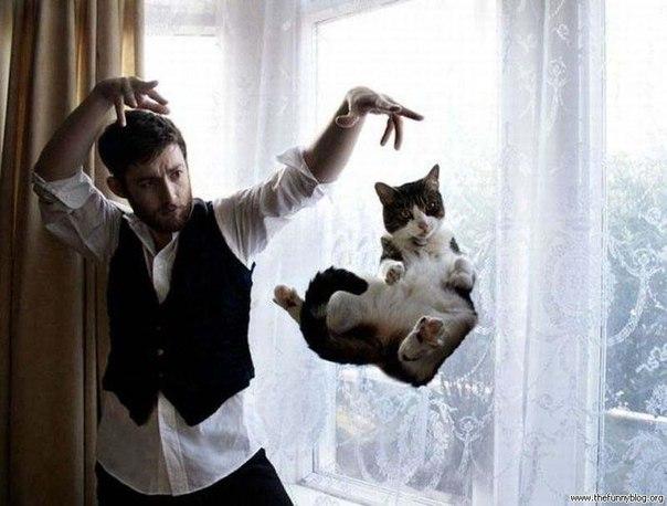 котэ, коты, котики (4)