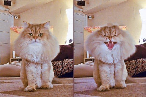 котэ, коты, котики (7)