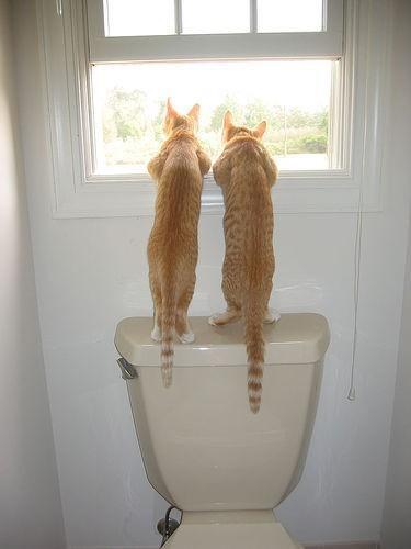 котэ, коты, котики (8)