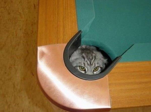 котэ, коты, котики (9)