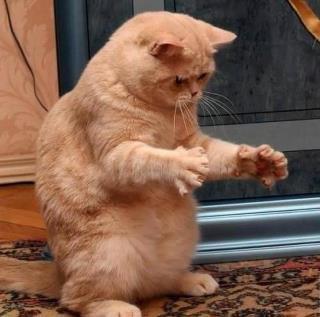 котэ, коты, котики (13)