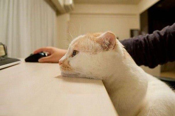 котэ, коты, котики (14)