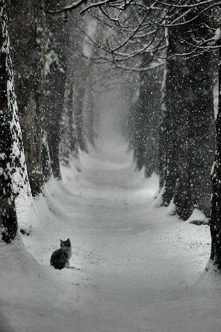 cats_snow