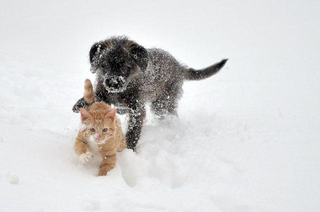 cats_snow (1)