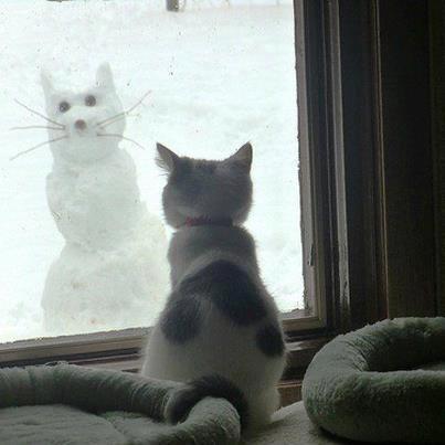 cats_snow (2)