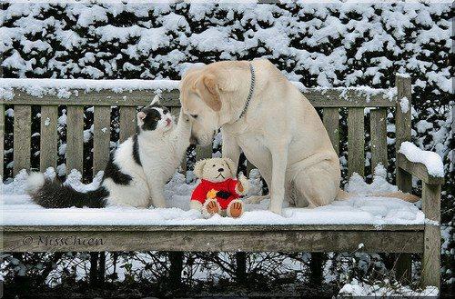 cats_snow (3)