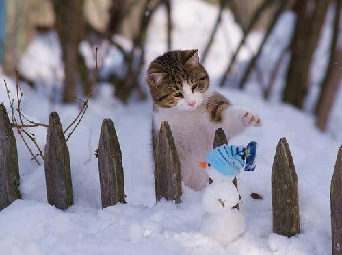 cats_snow (5)