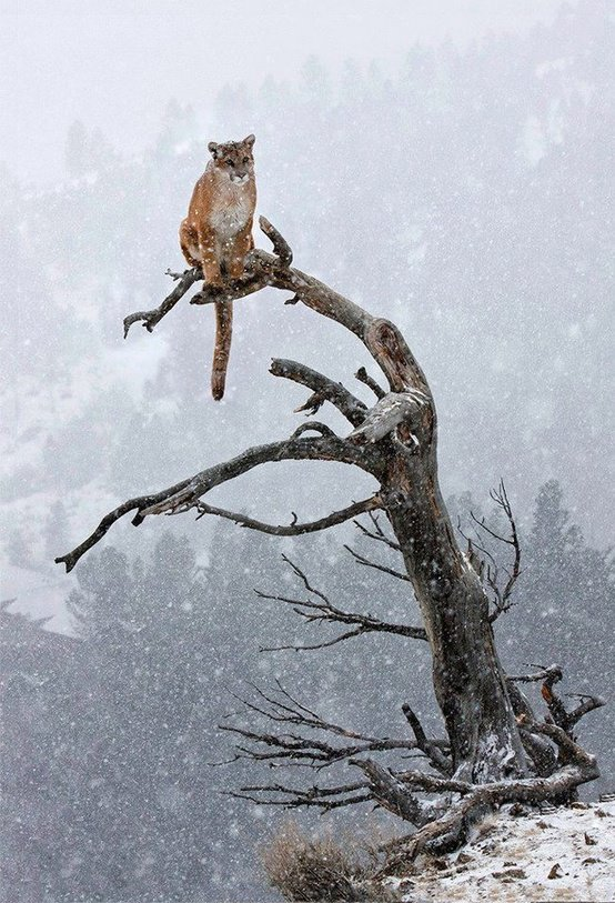 cats_snow (6)