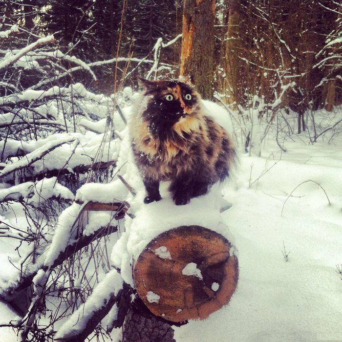cats_snow (7)