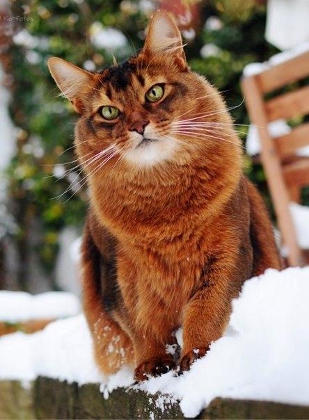 cats_snow (9)