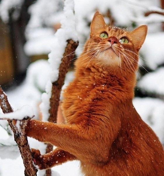 cats_snow (10)