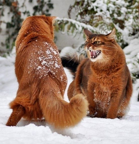 cats_snow (11)