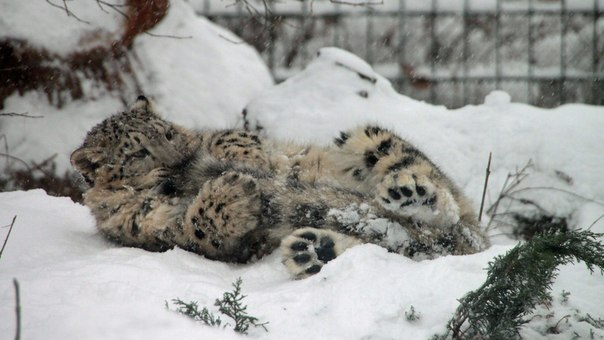 cats_snow (12)
