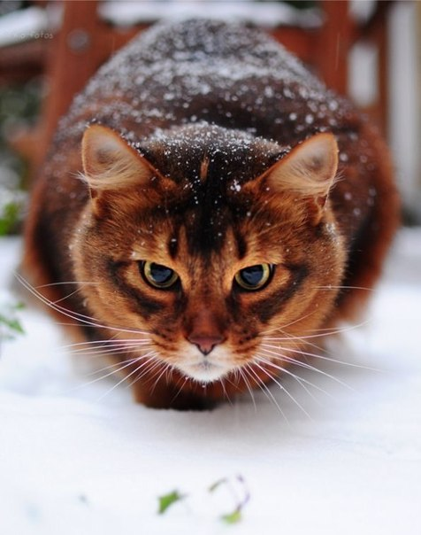 cats_snow (14)