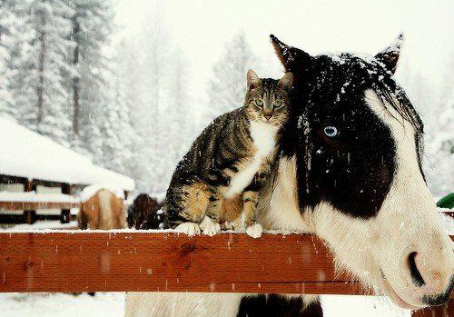 cats_snow (15)
