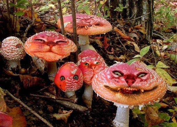 веселящий лес