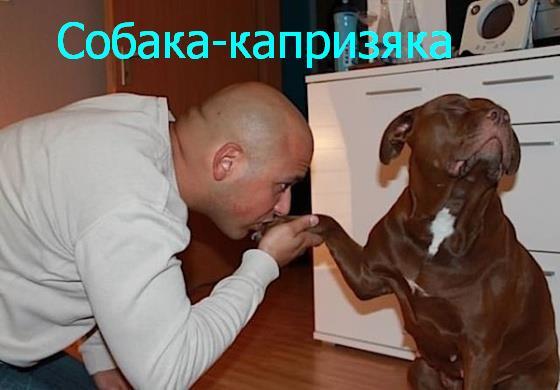 собаки_улыбаки_